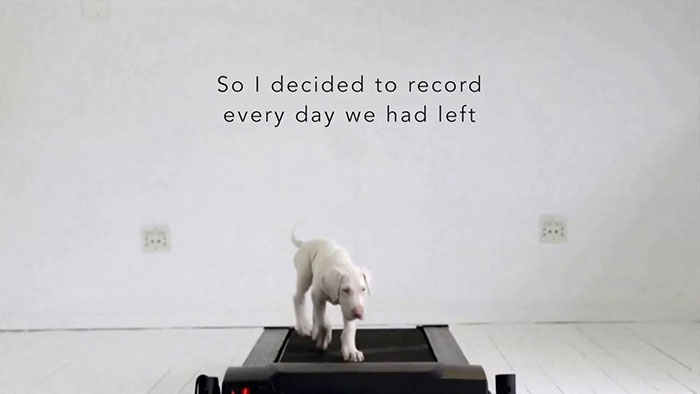 Watch Rescued Puppy Pegasus Growing Up In This Time-Lapse Video 4
