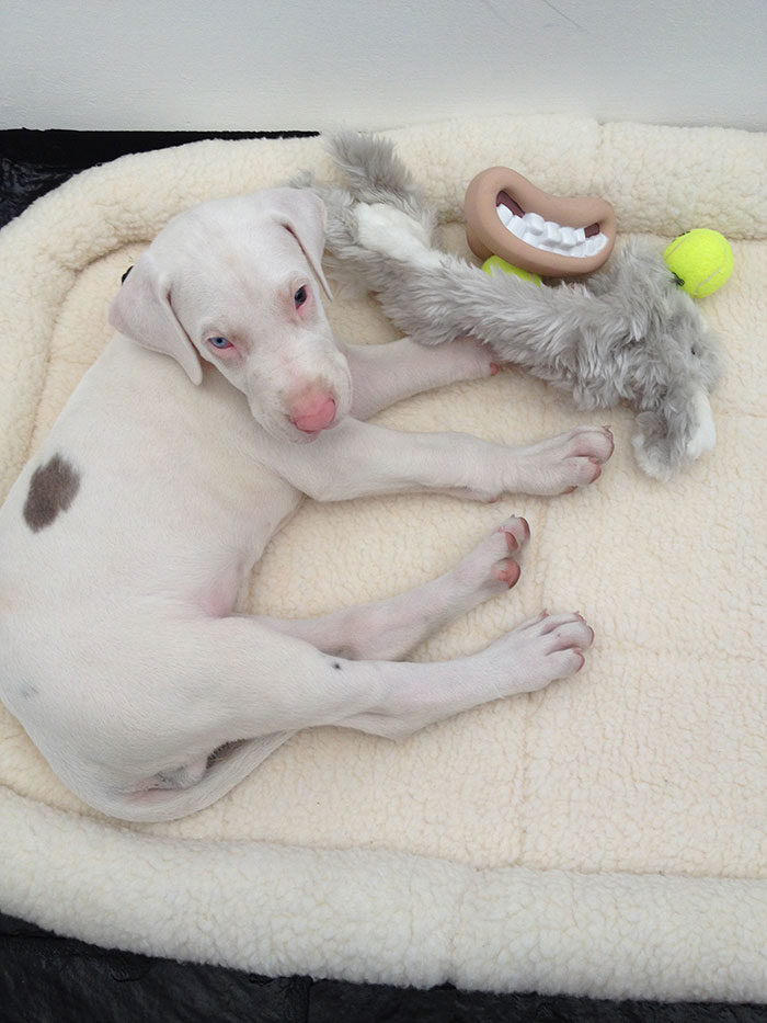 Watch Rescued Puppy Pegasus Growing Up In This Time-Lapse Video 6