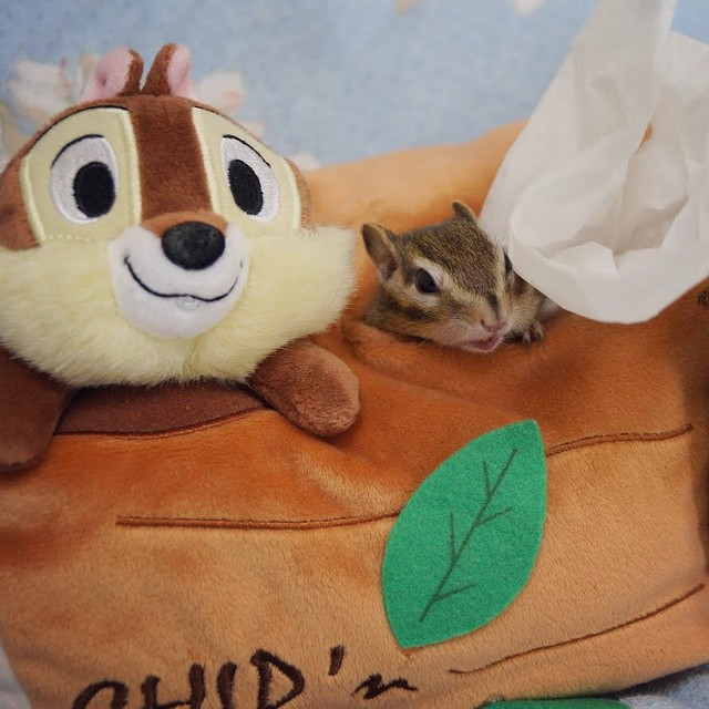 little chipmunk,Bikke and Tod 5