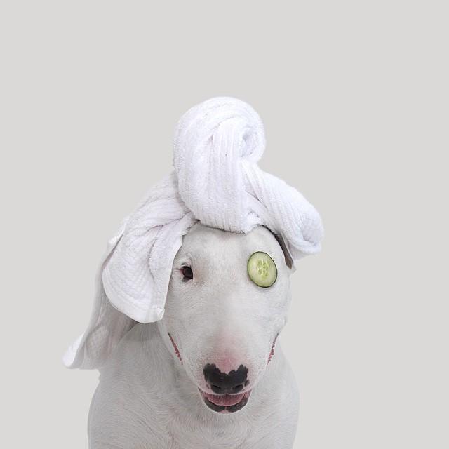 治愈離婚創傷的插畫攝影: 男人與狗的逗趣日常 1