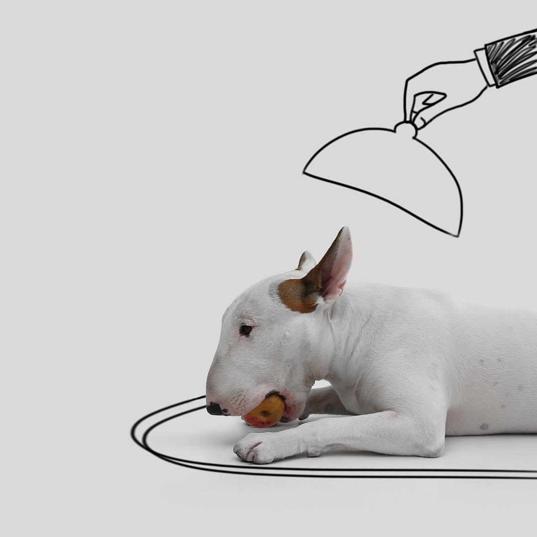 治愈離婚創傷的插畫攝影: 男人與狗的逗趣日常 3