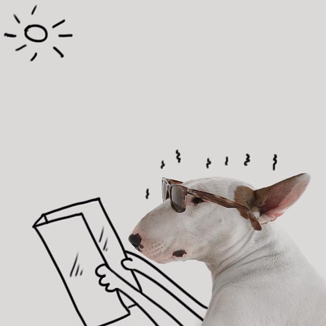 治愈離婚創傷的插畫攝影: 男人與狗的逗趣日常 5