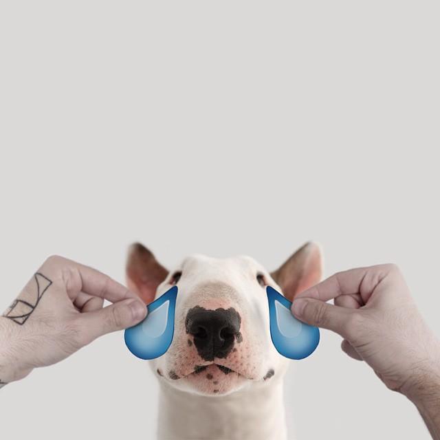 治愈離婚創傷的插畫攝影: 男人與狗的逗趣日常 6