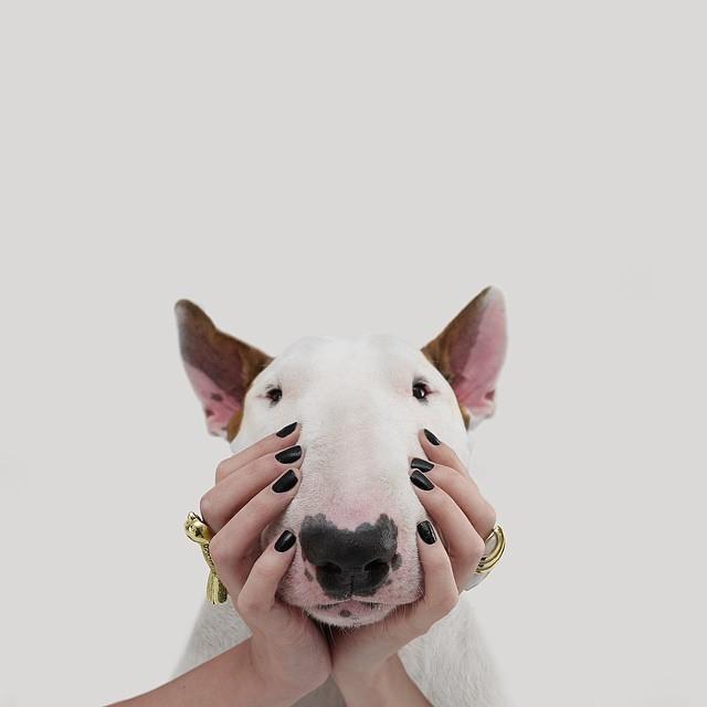 治愈離婚創傷的插畫攝影: 男人與狗的逗趣日常 12