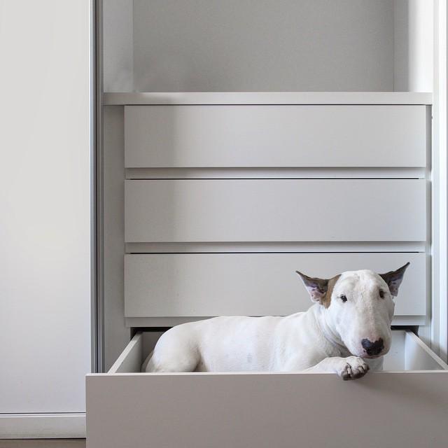 治愈離婚創傷的插畫攝影: 男人與狗的逗趣日常 13