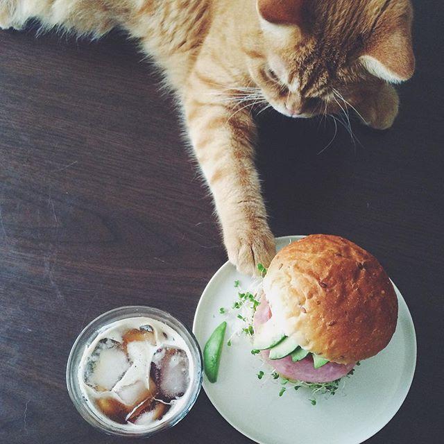 cat + food 1