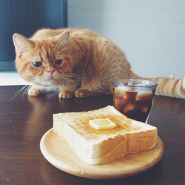 cat + food 4