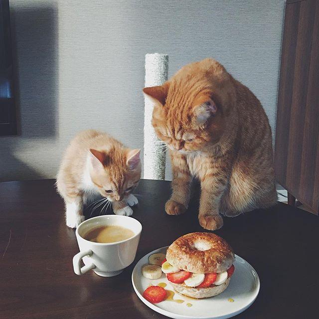 cat + food 16