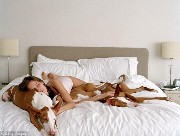 Good Night:跟毛小孩一同入睡吧~牠們能幫助美好夢鄉 1