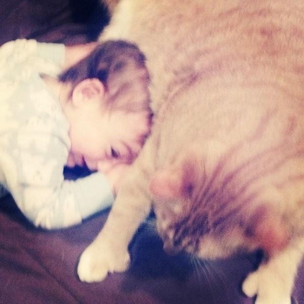 Love Together:被領養的流浪貓成為守護小男孩的感人片刻 1
