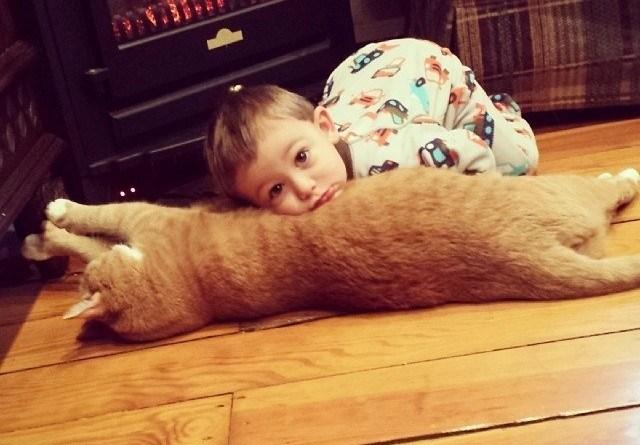 Love Together:被領養的流浪貓成為守護小男孩的感人片刻 2