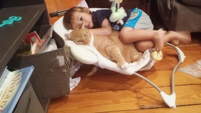 Love Together:被領養的流浪貓成為守護小男孩的感人片刻 3