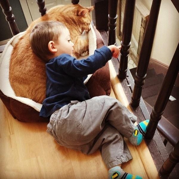 Love Together:被領養的流浪貓成為守護小男孩的感人片刻 6