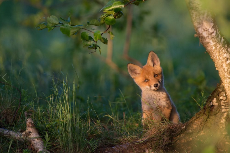 世界上還有許多美麗值得發現:National Geographic 評選 2015 年世界奇景 10