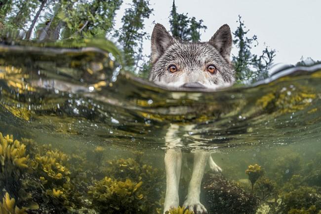 National Geographic 2015 年最棒的 20 張影像 5