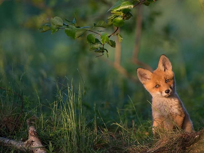 National Geographic 2015 年最棒的 20 張影像 19
