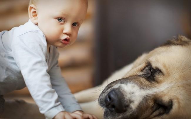 Say:「Yes!」讓小朋友養寵物吧~這是幫助成長的原因 5