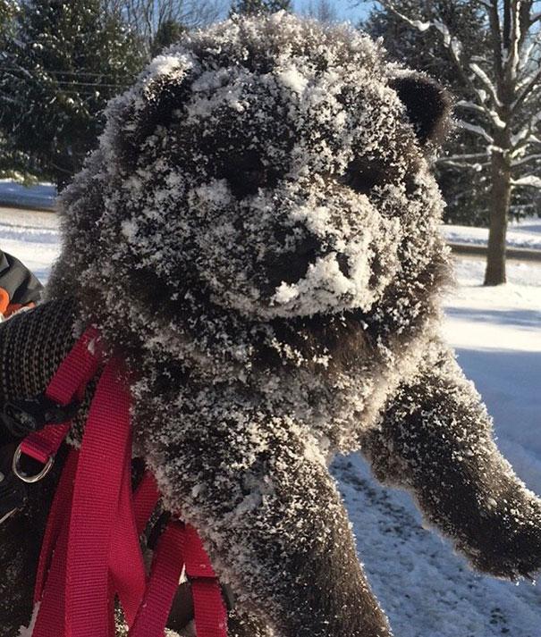 Dogs or Teddy Bears?讓人融化的 15 張可愛小狗,超萌的好像「泰迪熊」 5