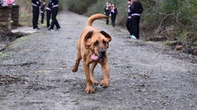 Keep Running:這是一隻來自美國的獵犬主動加入「馬拉松賽跑」的冒險故事! 2