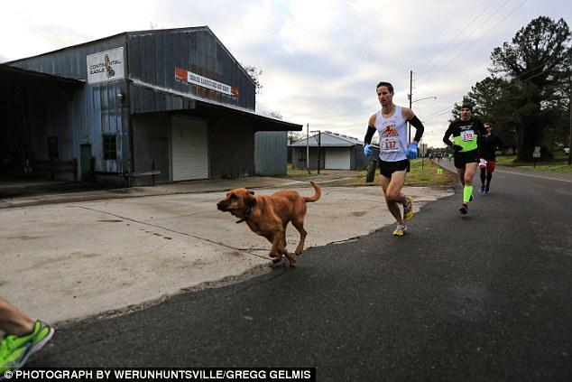 Keep Running:這是一隻來自美國的獵犬主動加入「馬拉松賽跑」的冒險故事! 3
