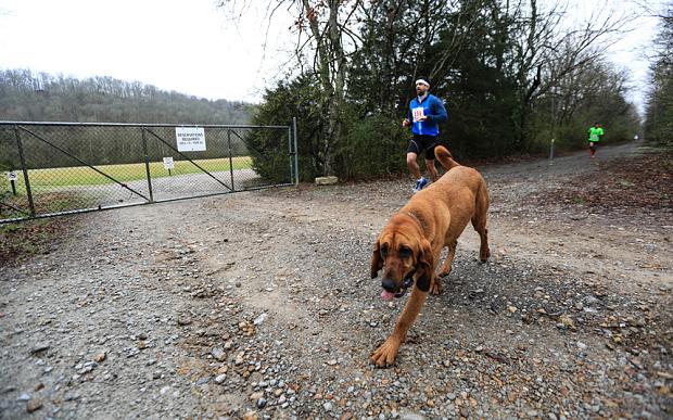 Keep Running:這是一隻來自美國的獵犬主動加入「馬拉松賽跑」的冒險故事! 8