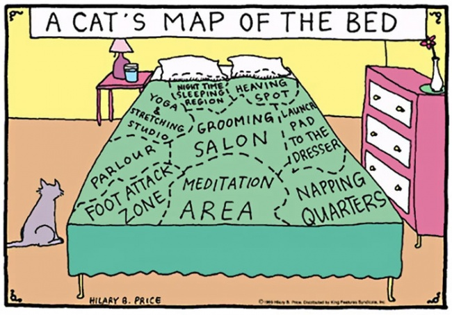 Cat Lovers:喵星人到底在想什麼?14 個養貓人會懂的貓咪的怪異個性 8