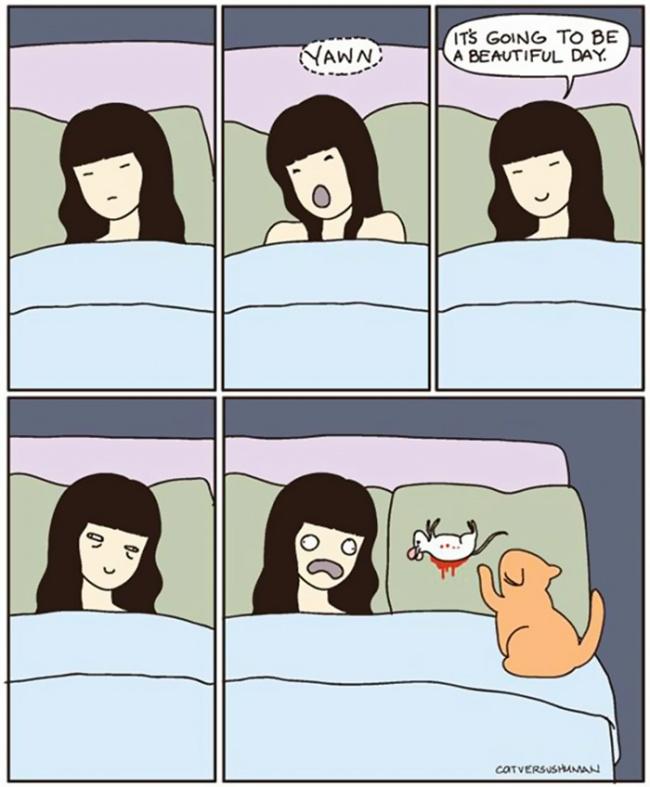 Cat Lovers:喵星人到底在想什麼?14 個養貓人會懂的貓咪的怪異個性 9
