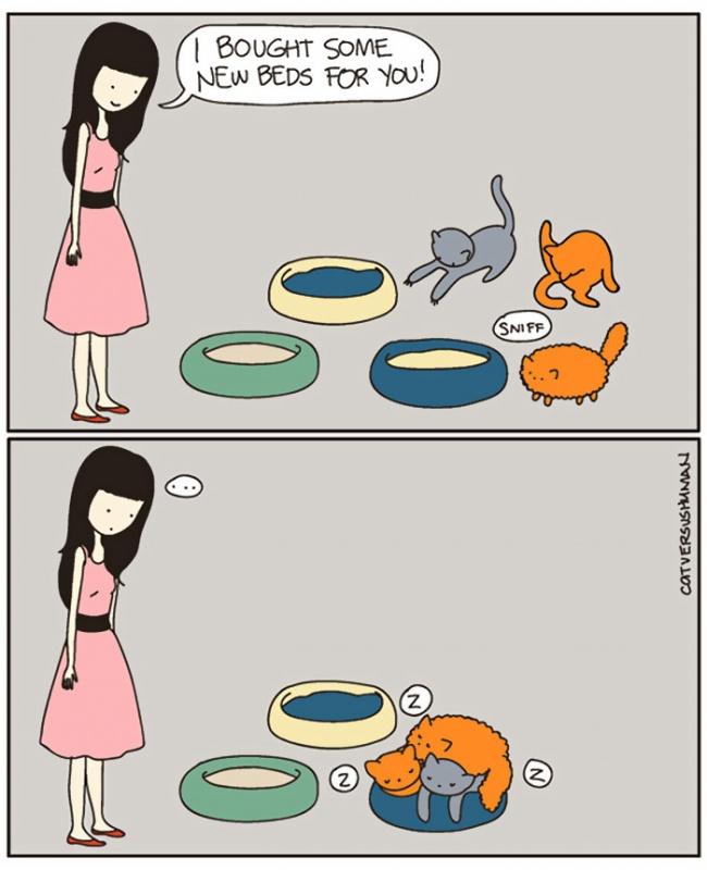 Cat Lovers:喵星人到底在想什麼?14 個養貓人會懂的貓咪的怪異個性 12