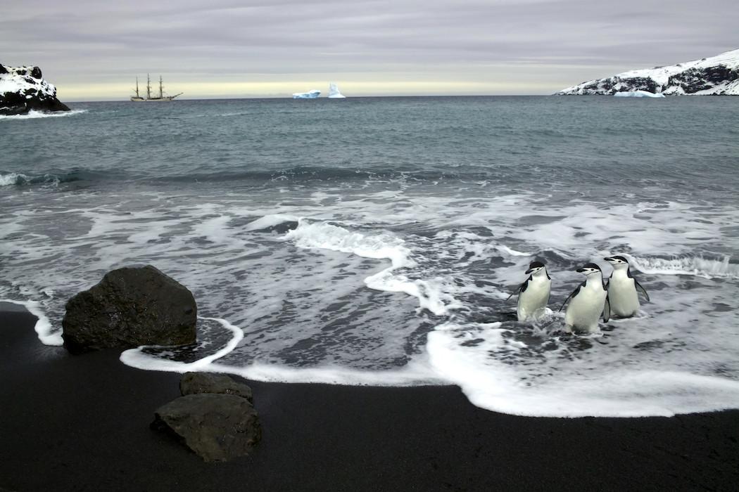 A Voyage To Antarctica By René Koster 5