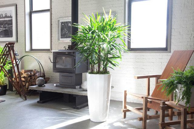 前 NASA 科學家推介:五種淨化空氣的美麗植物,值得你種在家中 1