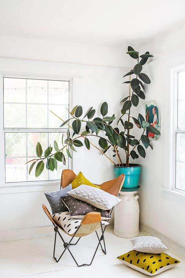 前 NASA 科學家推介:五種淨化空氣的美麗植物,值得你種在家中 2