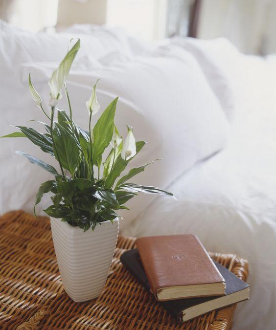 前 NASA 科學家推介:五種淨化空氣的美麗植物,值得你種在家中 4