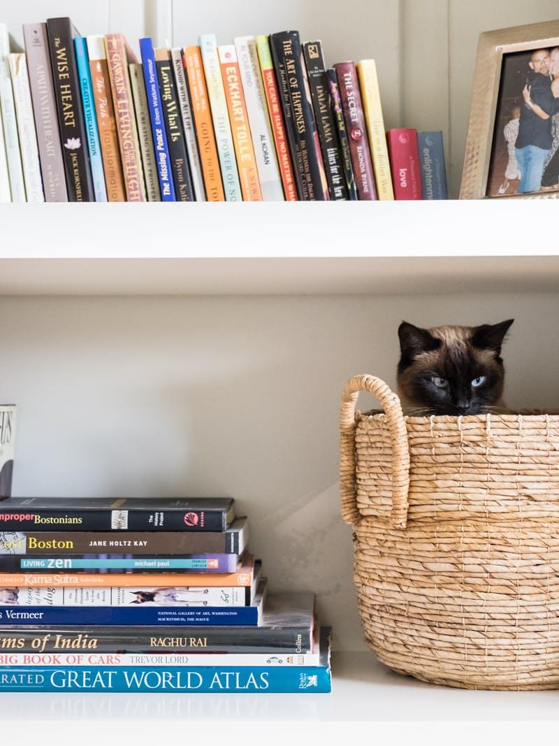 讓貓咪在家不無聊:6 個居家重點讓生活在小公寓中的喵喵擁有貓咪操場 1