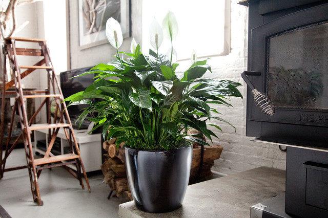 美國太空總署 NASA 認証:這 18 種植物養在家裡可以成為天然的空氣濾淨機 4