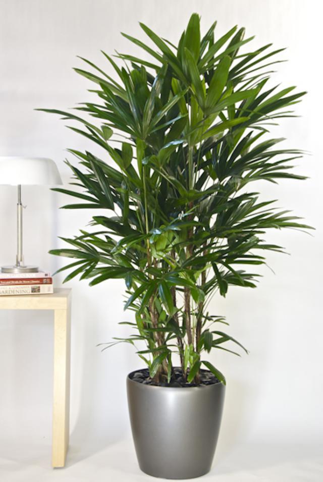 美國太空總署 NASA 認証:這 18 種植物養在家裡可以成為天然的空氣濾淨機 5