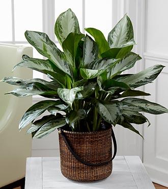美國太空總署 NASA 認証:這 18 種植物養在家裡可以成為天然的空氣濾淨機 9