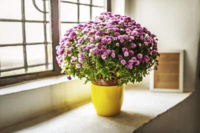 美國太空總署 NASA 認証:這 18 種植物養在家裡可以成為天然的空氣濾淨機 14