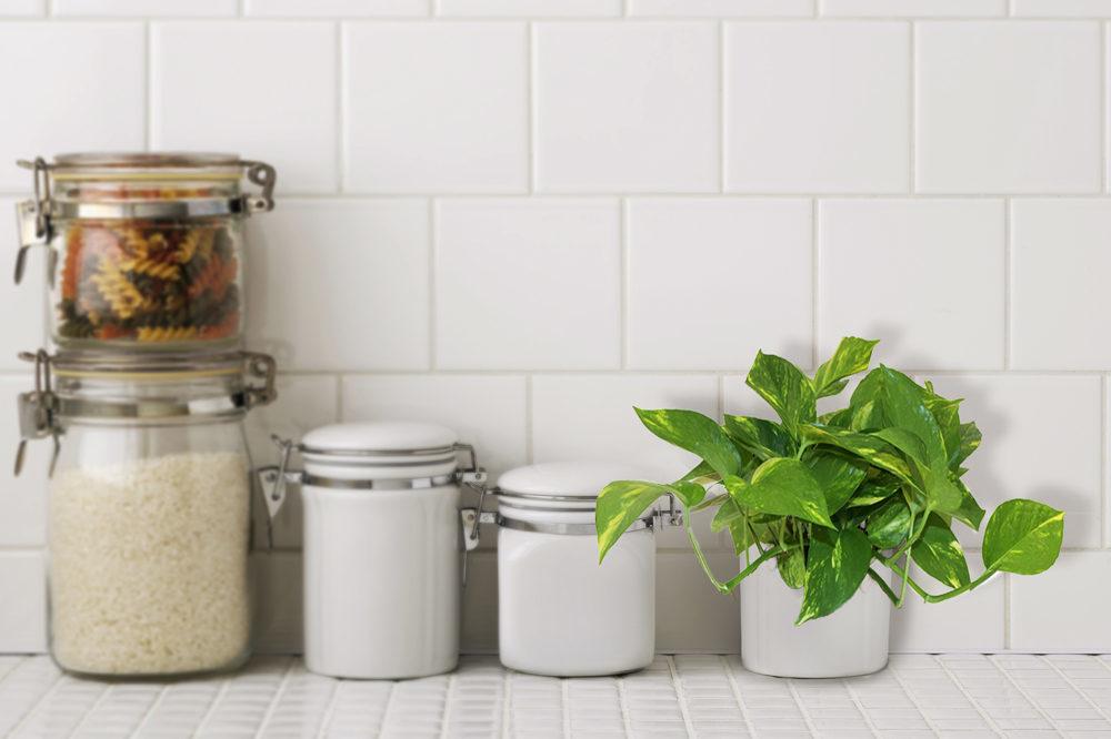NASA 指南:這 10 種植物養在家裡可以成為天然的空氣濾淨機 1