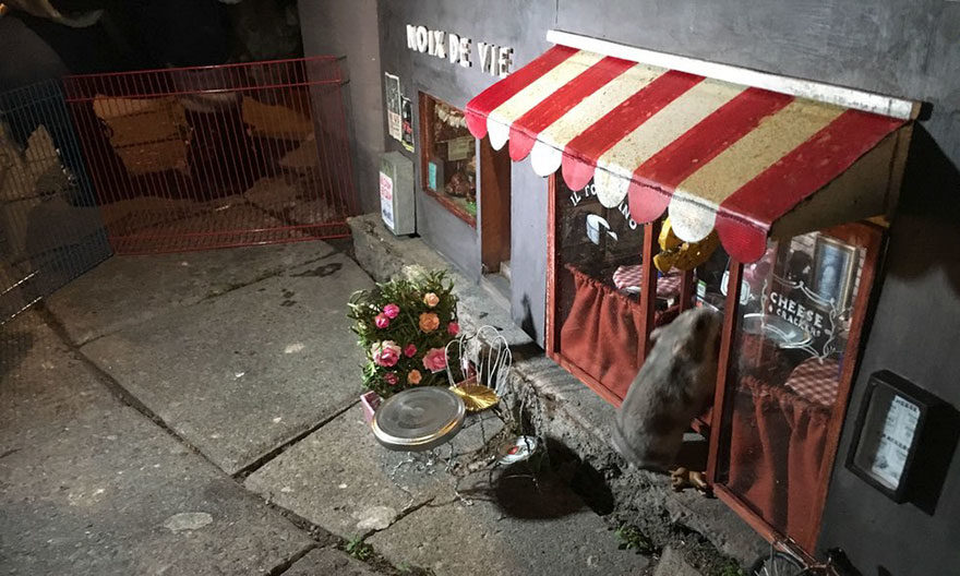 Anonymouse Are Opening Tiny Shops For Mice In Sweden 7