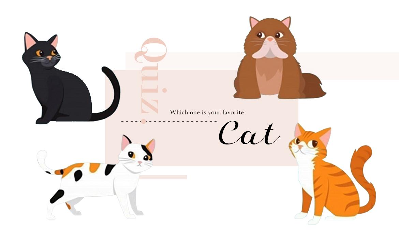看圖測驗:選一隻貓咪,釐清你在愛情裡的真實模樣